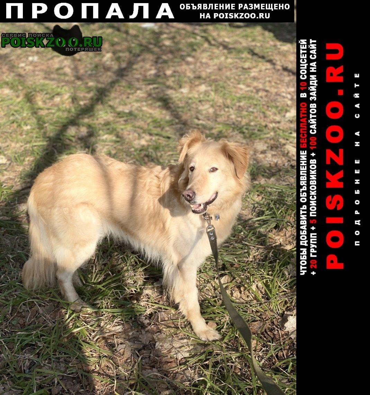 Истра Пропала собака кобель рыжий пугливый пёс