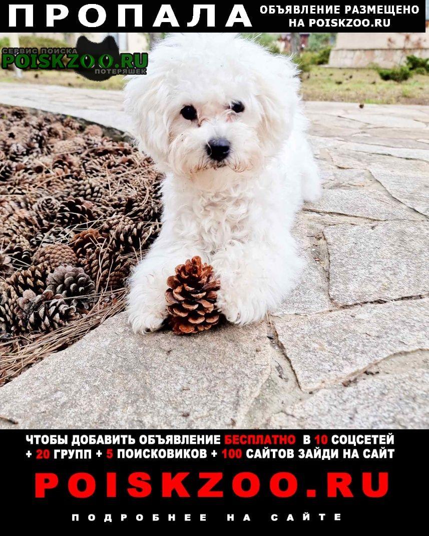 Пропала собака бишен в Коблево