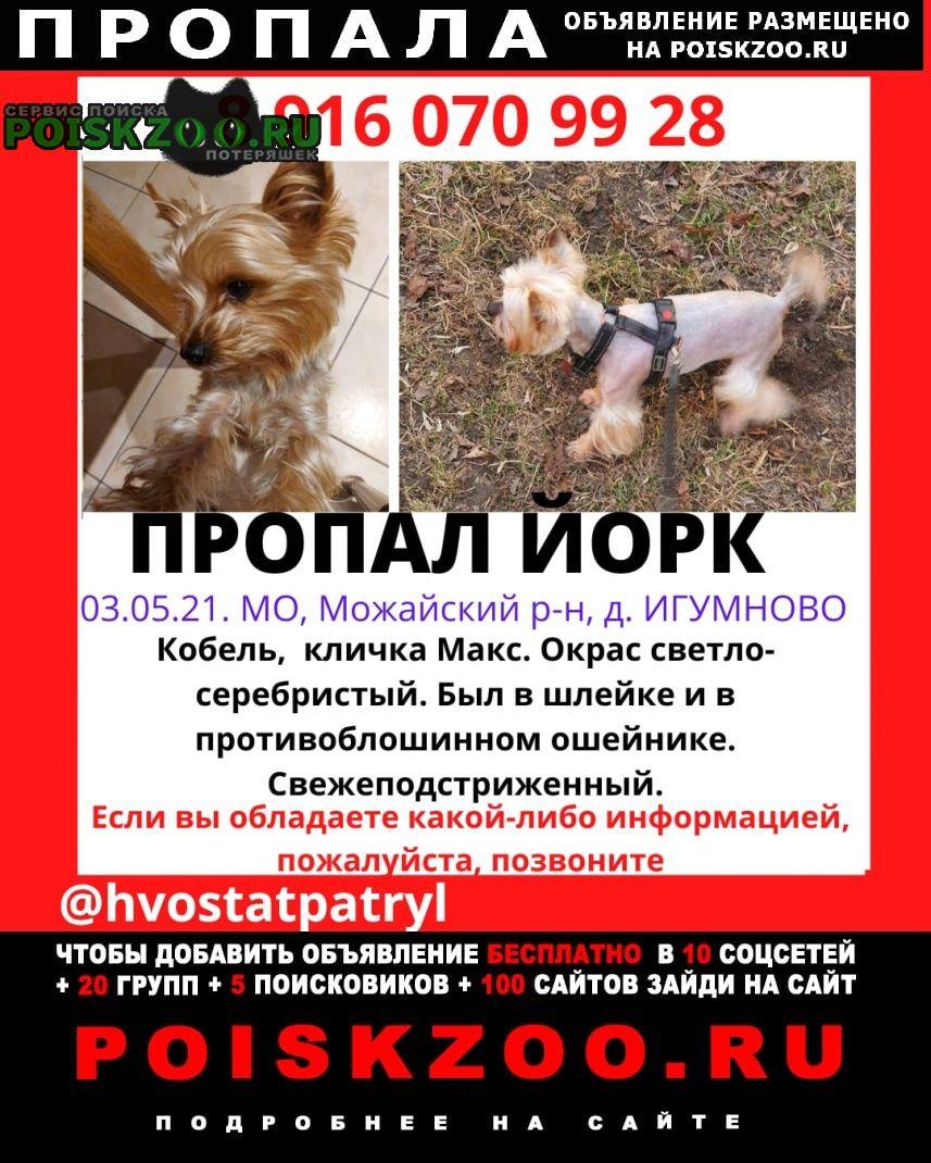 Пропала собака кобель йорк, в д.игумново, ий район Можайск