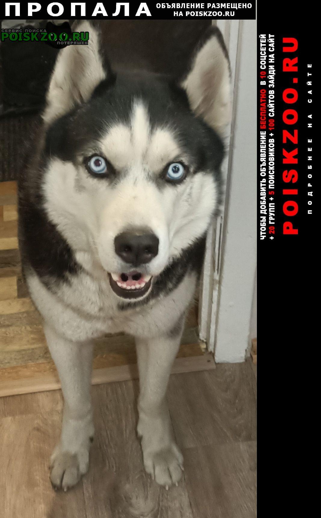 Пропала собака кобель породы хаски Чита