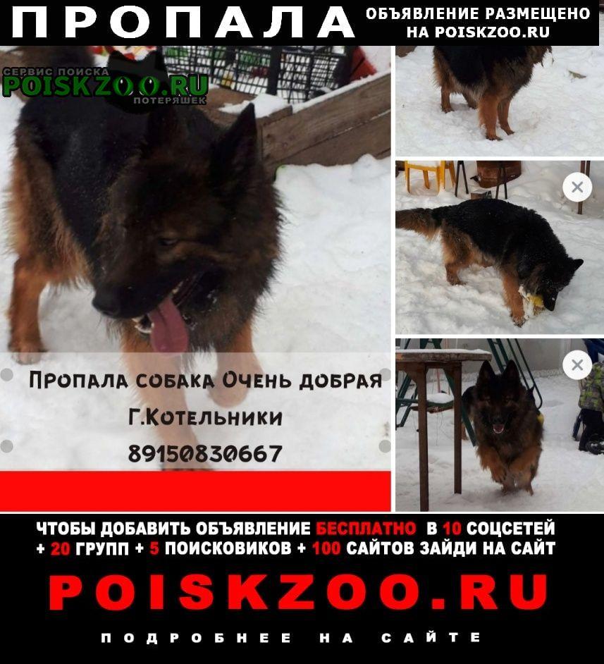 Пропала собака немецкая овчарка Котельники