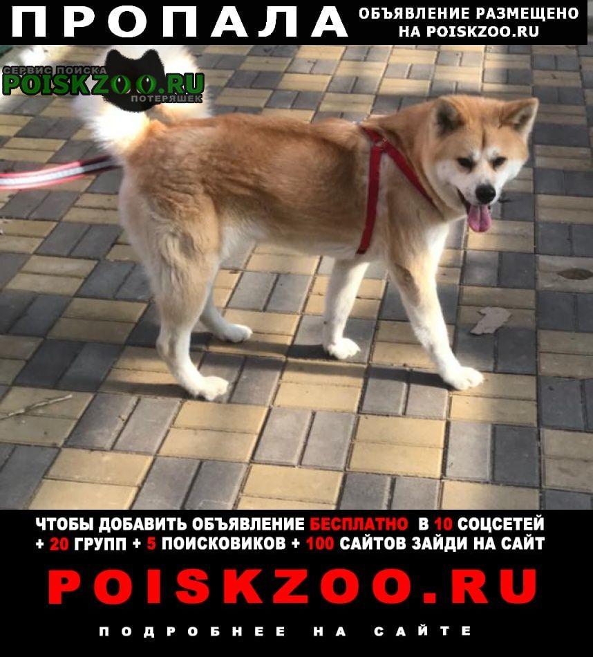 Пропала собака вознаграждение Сочи