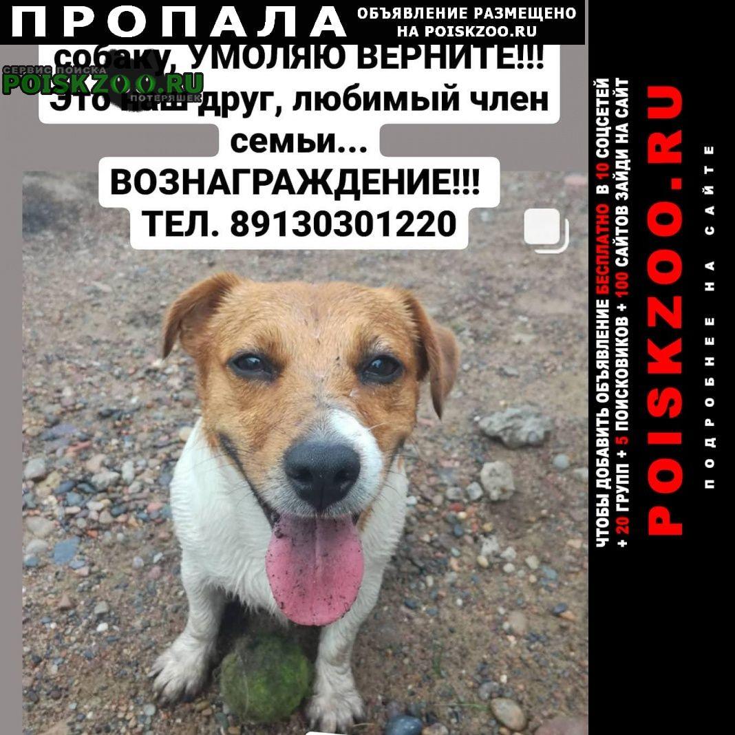 Пропала собака кобель Красноярск