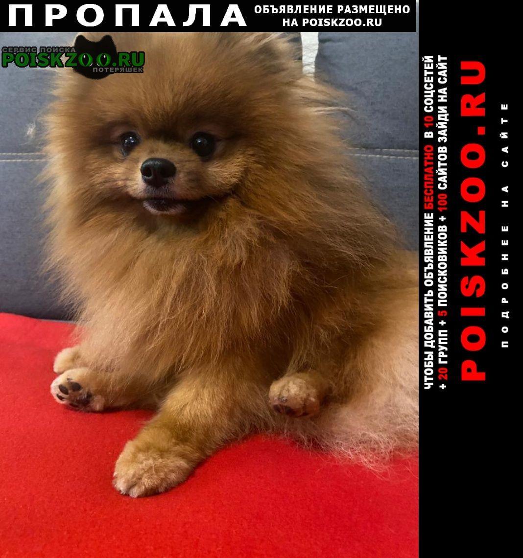 Пропала собака кобель шпиц Екатеринбург
