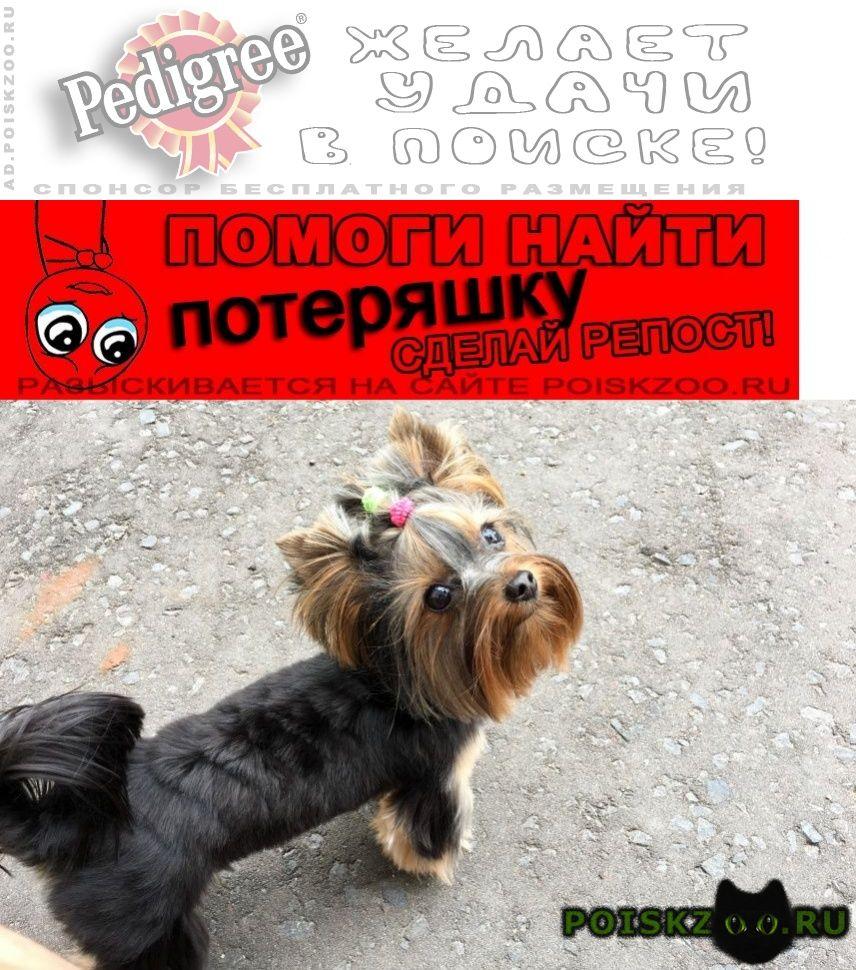Пропала собака г.Омск