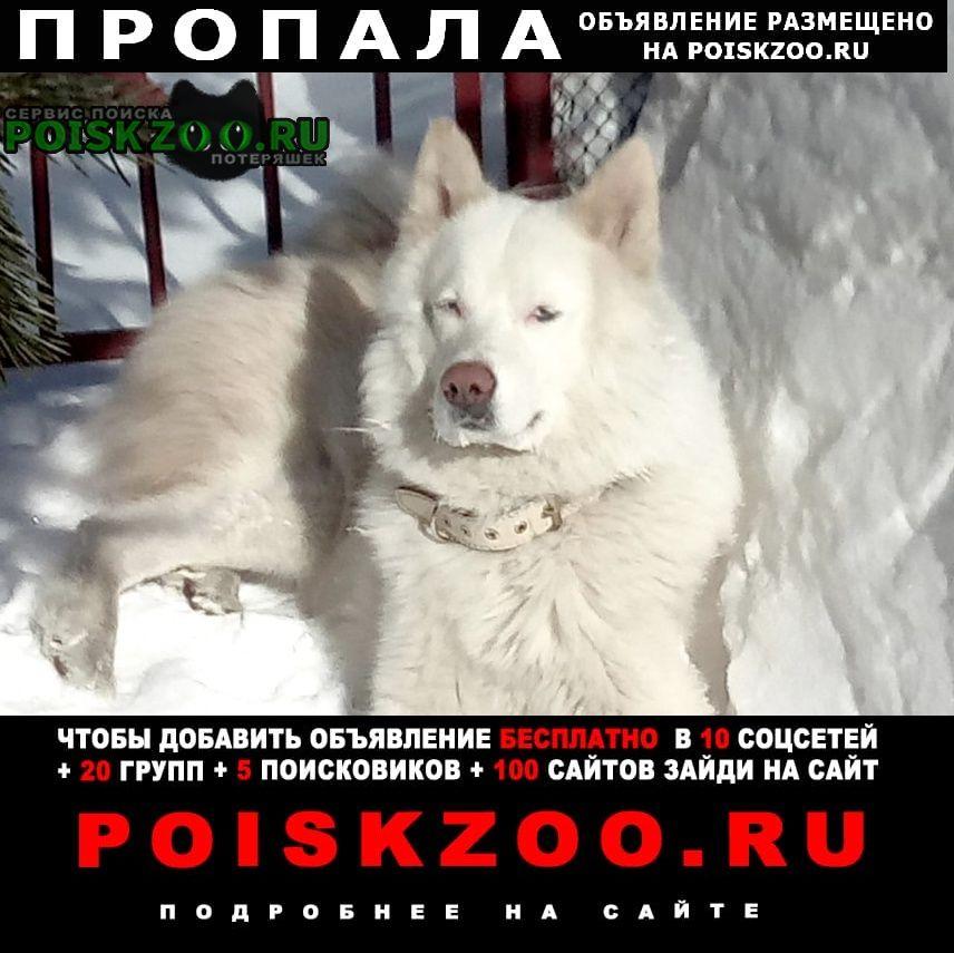Пропала собака кобель срочно Новокузнецк