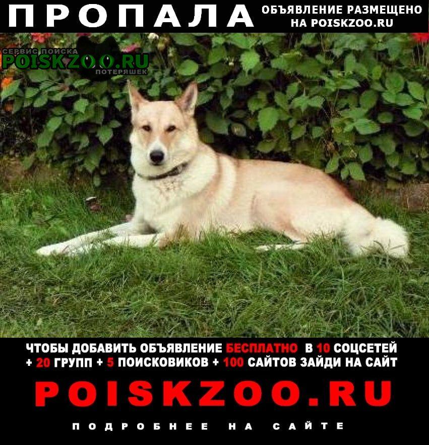 Истра Пропала собака потерялась рыжая лайка зсл