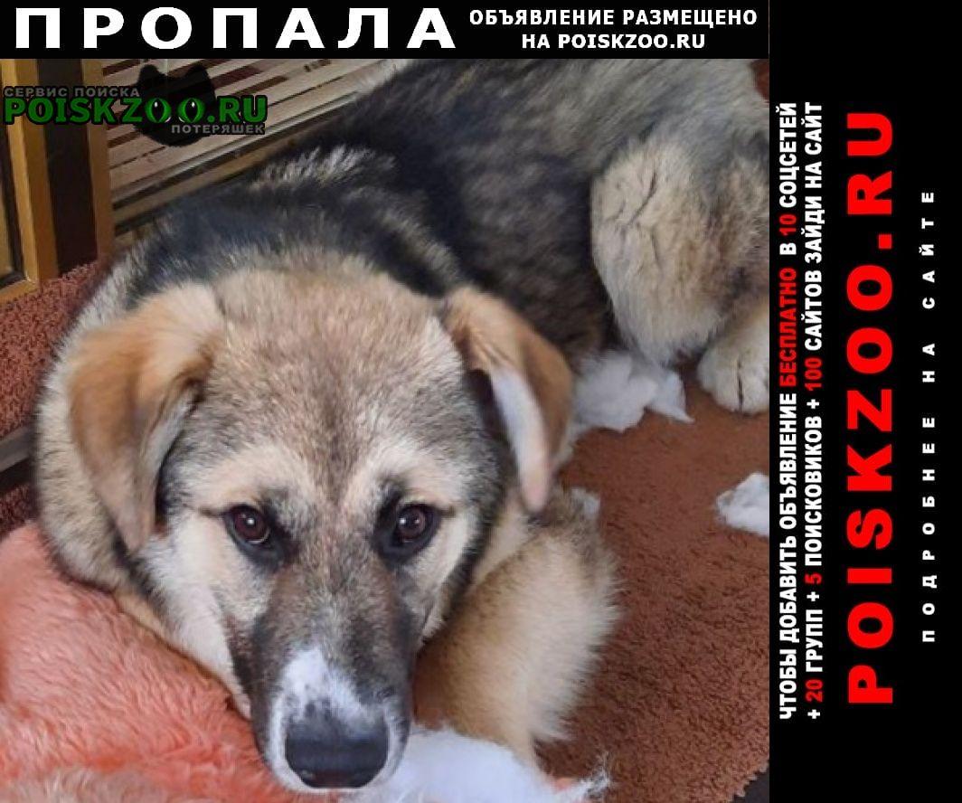 Пропала собака кобель ищем гошу Сургут