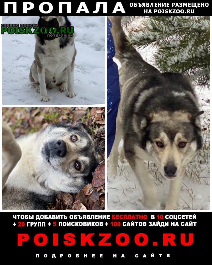 Пропала собака кобель д. никольское ий р-н мо Солнечногорск
