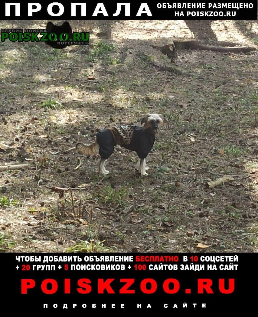 Пропала собака 9 мая в 22 часа из жк фрайдей вилладж юр Москва
