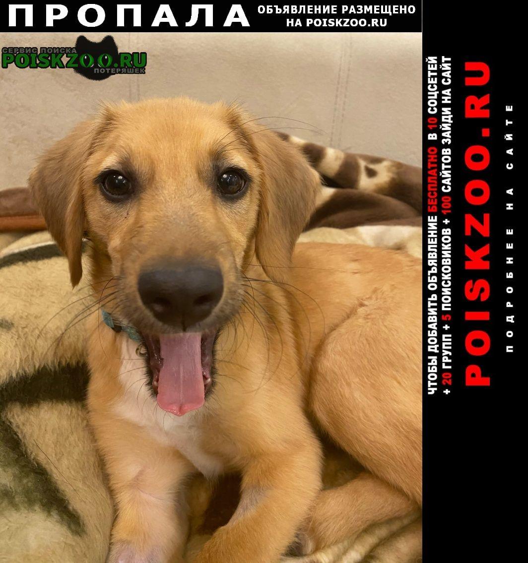 Пропала собака кобель помогите пожалуйста найти щенка Йошкар-Ола