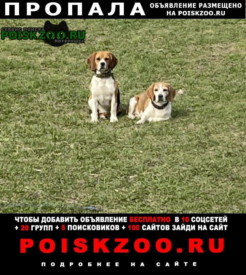 Пропала собака просьба нашедшему вернуть, вознагрождени Михайлов