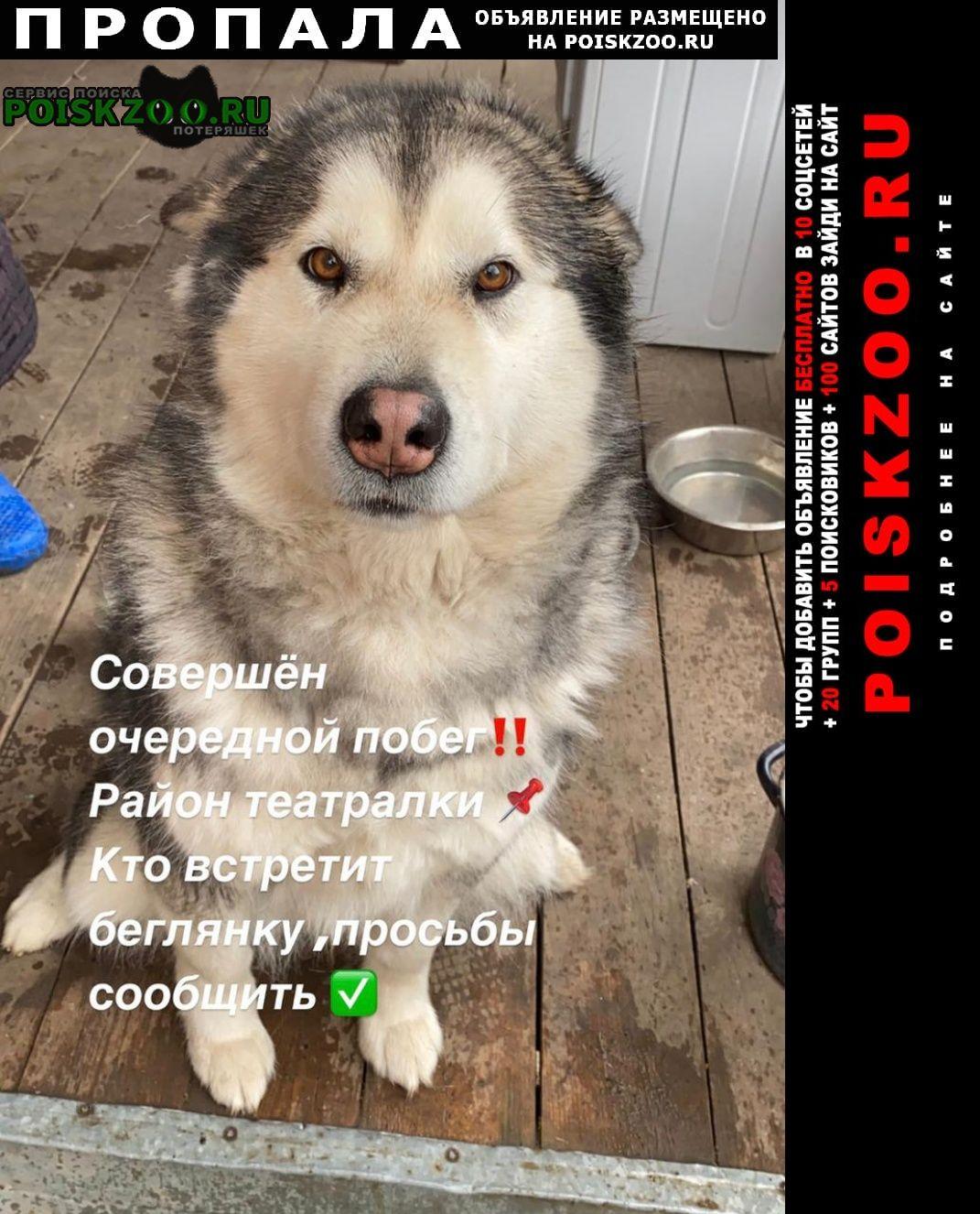 Пропала собака помогите найти собаку Ростов-на-Дону