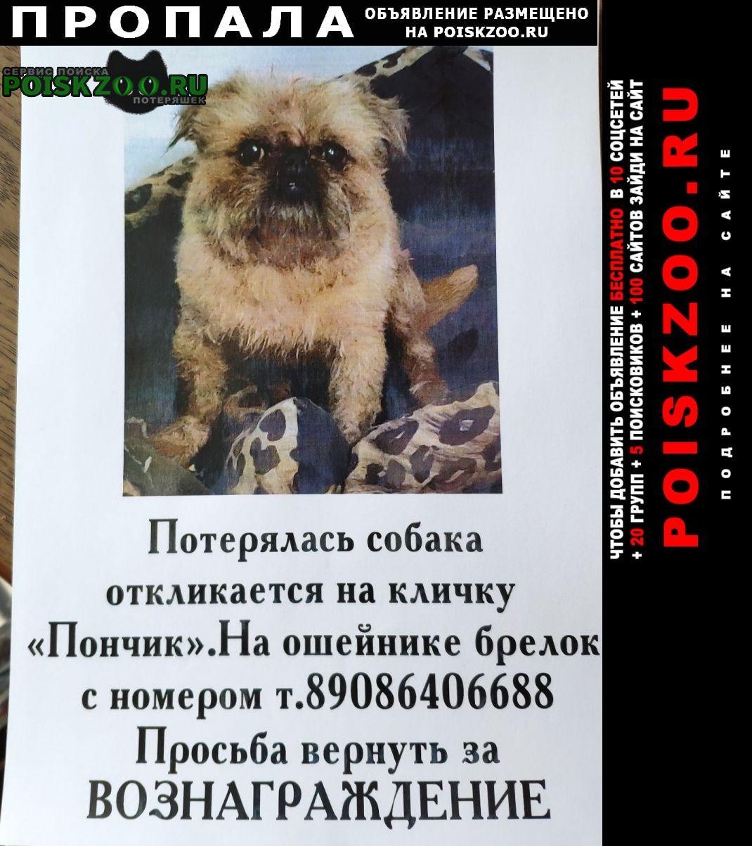 Пропала собака кобель брюссельский грифон Ангарск