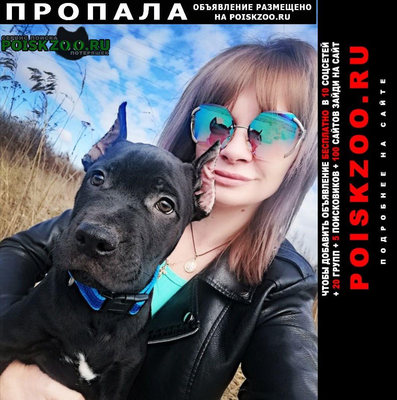 Пропала собака кобель пушкинский район славянка ростовская. 9м Санкт-Петербург