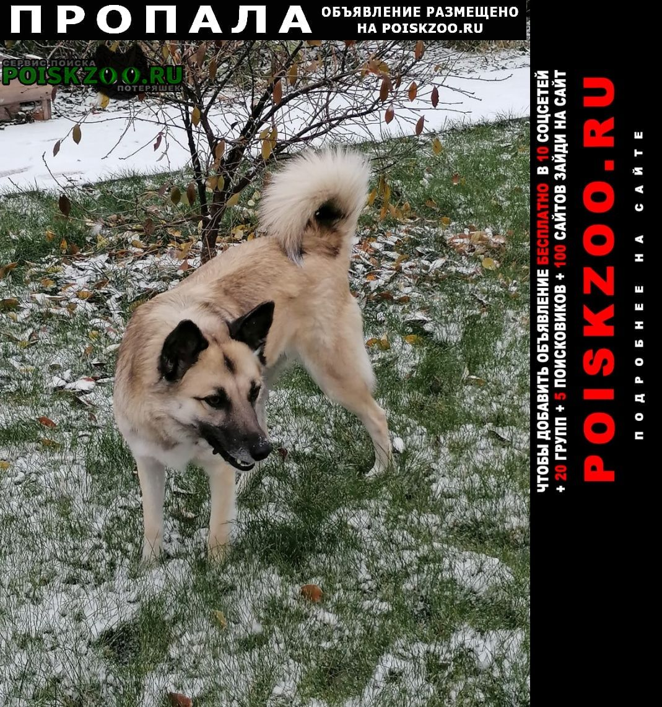 Пропала собака в свердловской области Арти