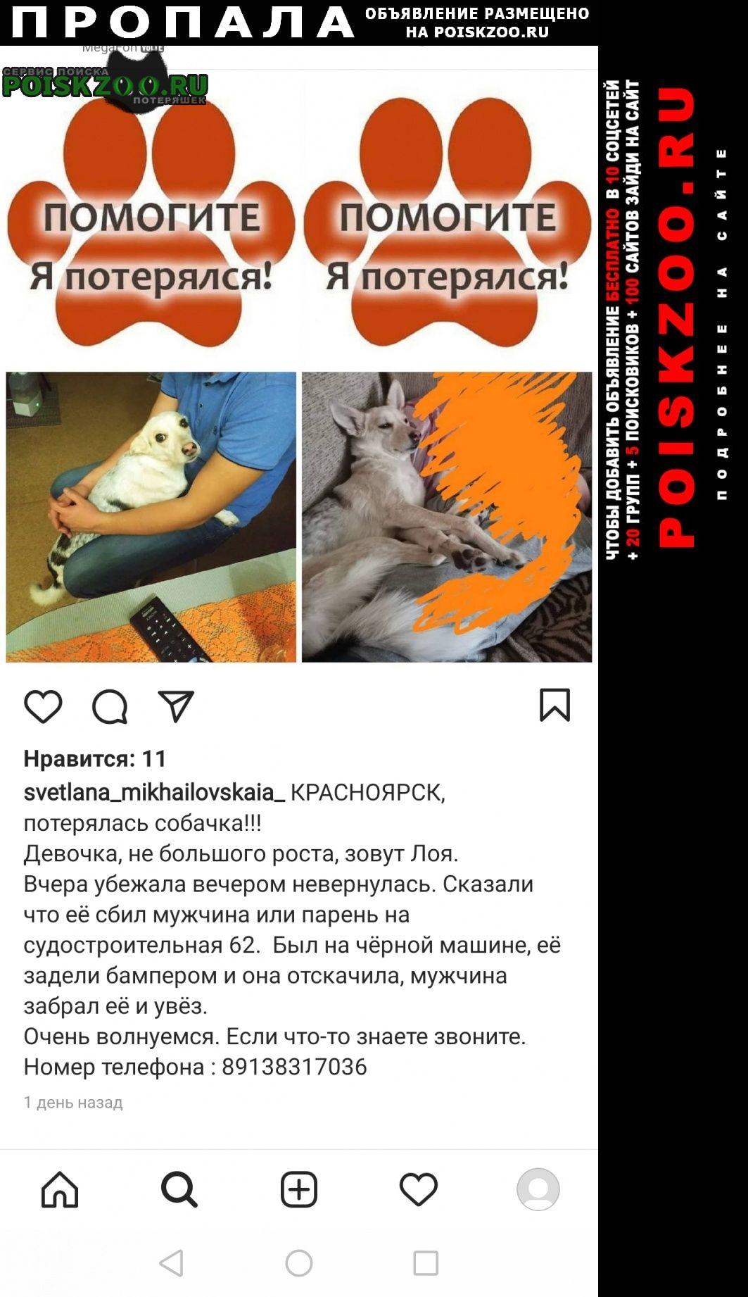 Пропала собака. Красноярск