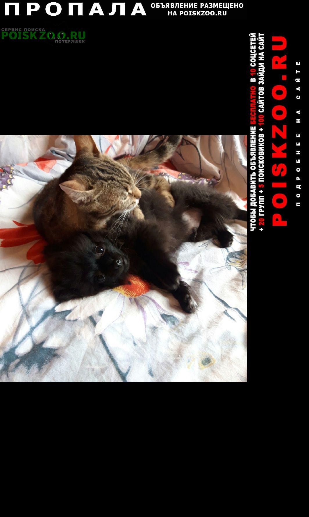 Пропала собака кобель помогите Санкт-Петербург