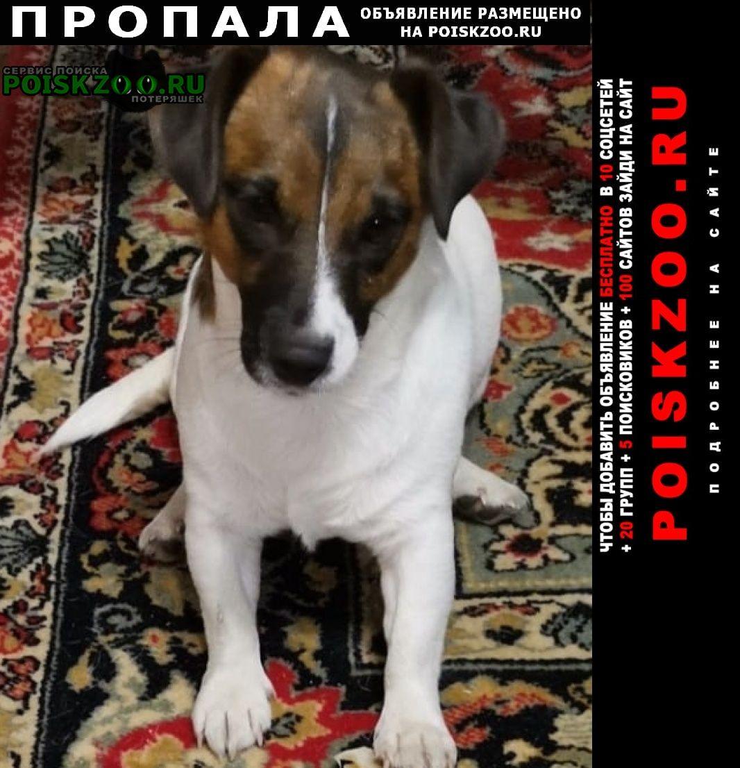 Пропала собака джек рассел терьер Воронеж