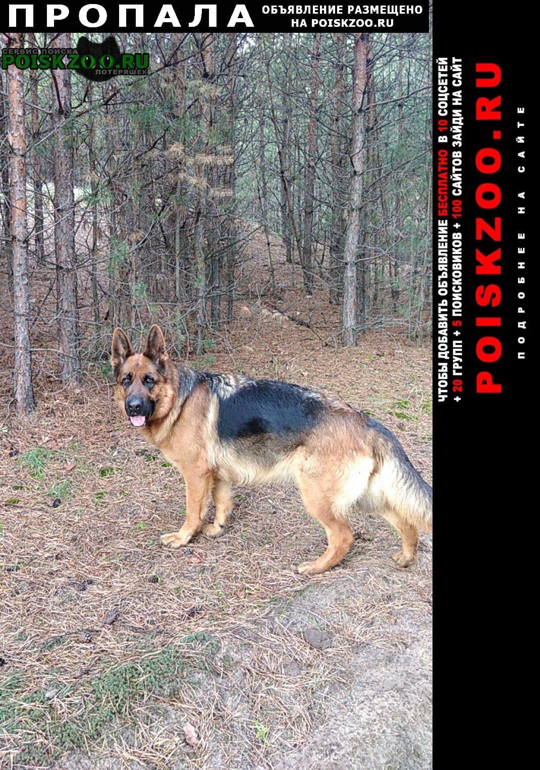 Пропала собака немецкая овчарка девочка Новая Усмань