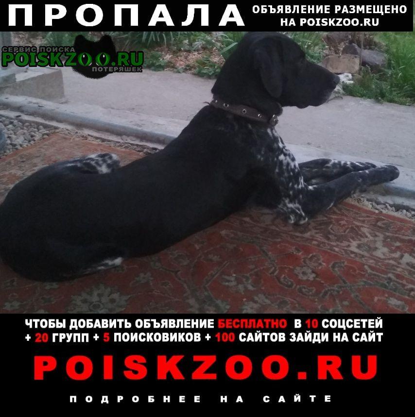 Пропала собака кобель курцхаар Адыгейск