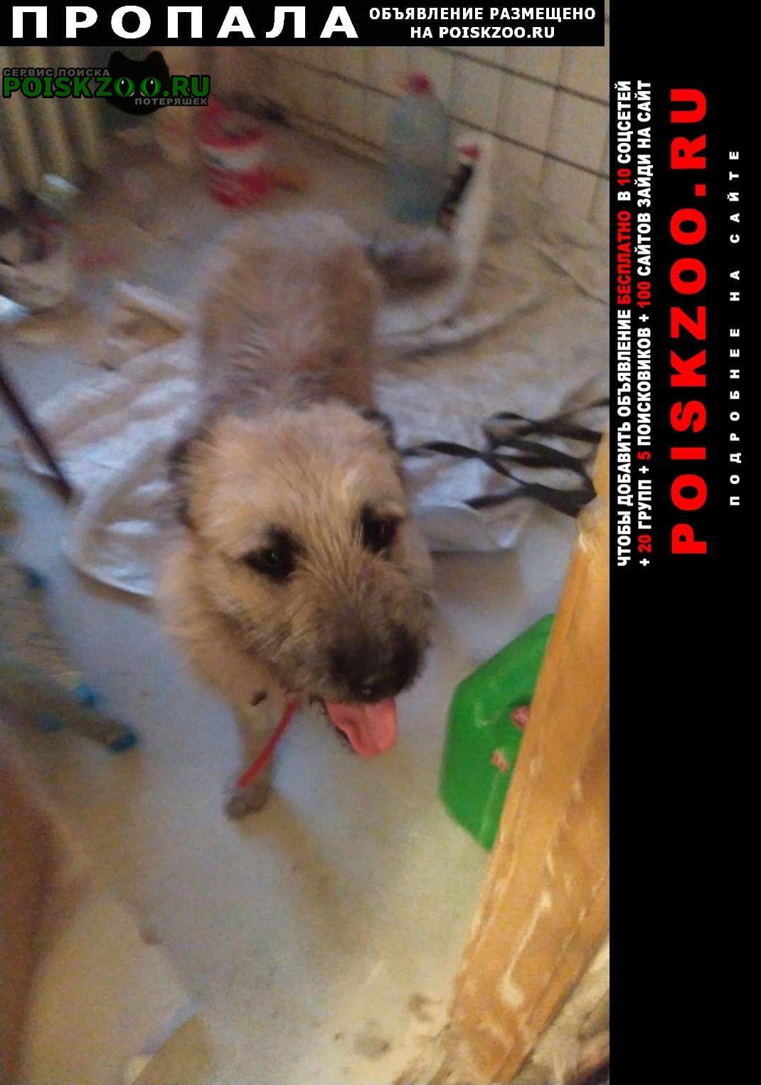 Пропала собака кобель помогите пожалуйста найти тобика Москва