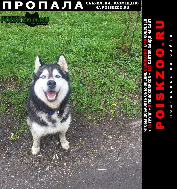 Пропала собака кобель Барыбино