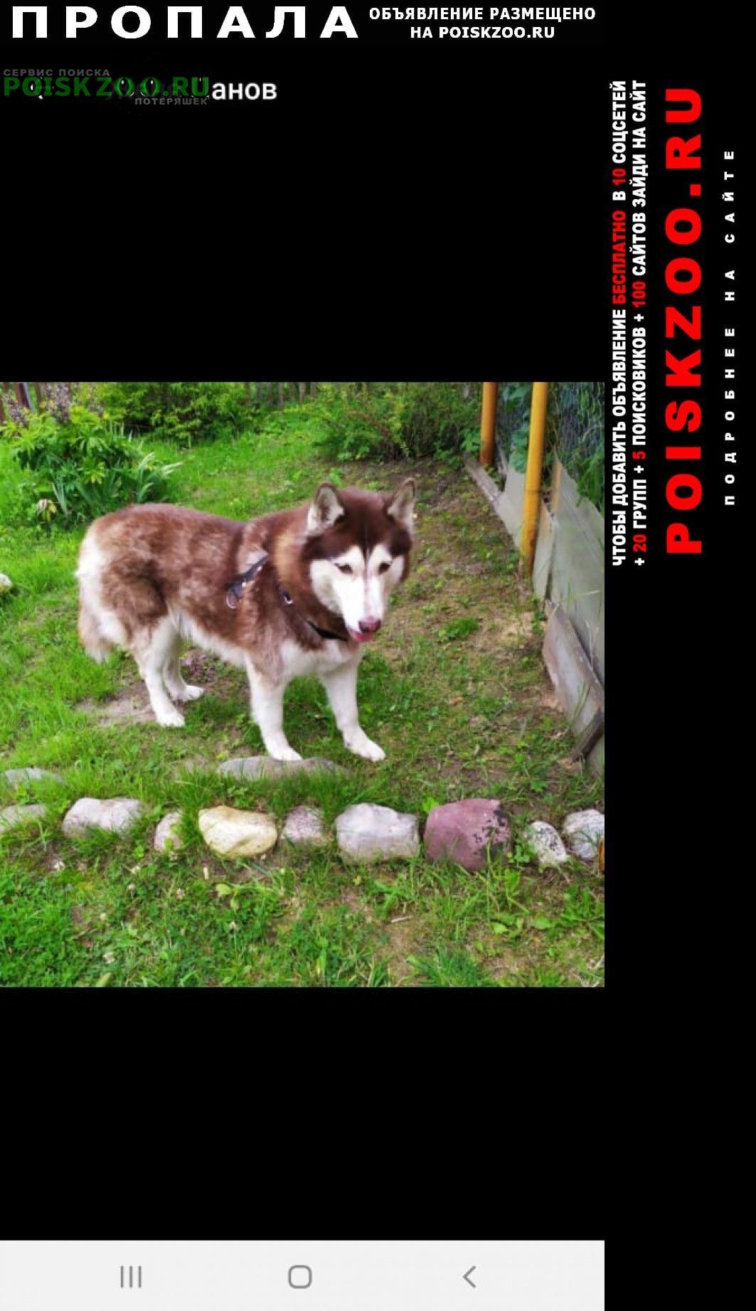 Пропала собака кобель мальчик кабель Ярославль