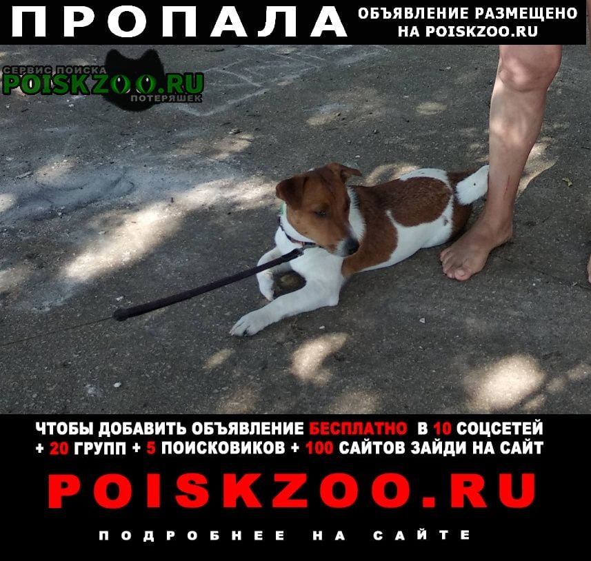 Пропала собака кобель в районе ул. югорская 1 Ханты-Мансийск