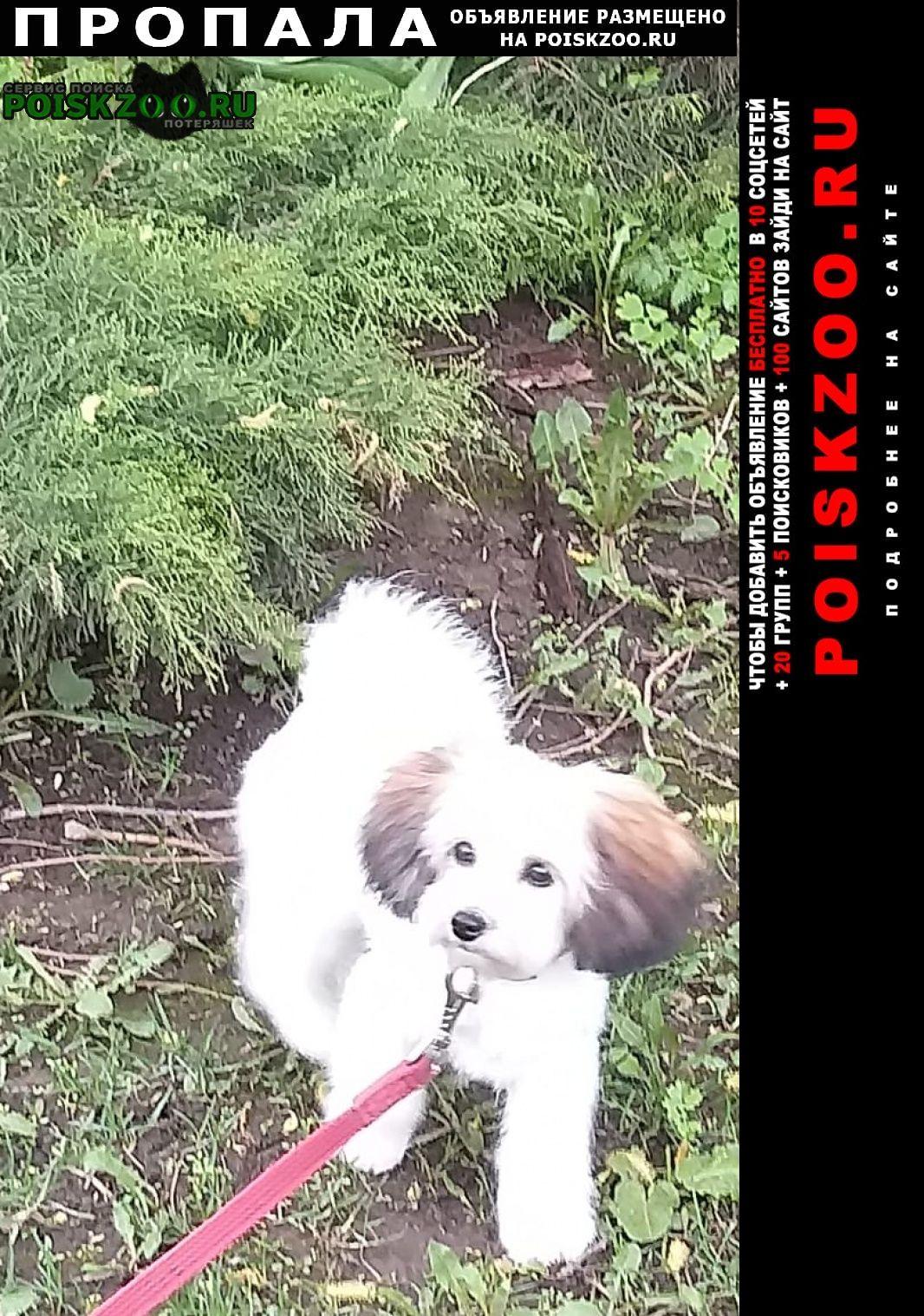 Пропала собака кобель маленький белый щенок Москва