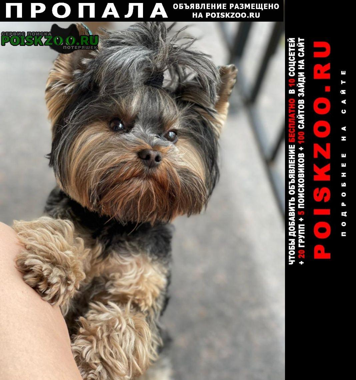 Пропала собака кобель Брянск