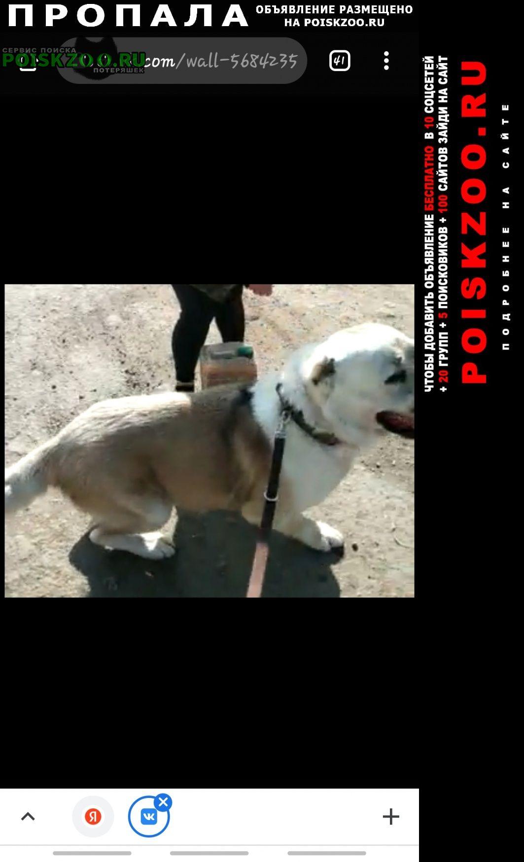 Пропала собака кобель среднеазиатская овчарка Саратов