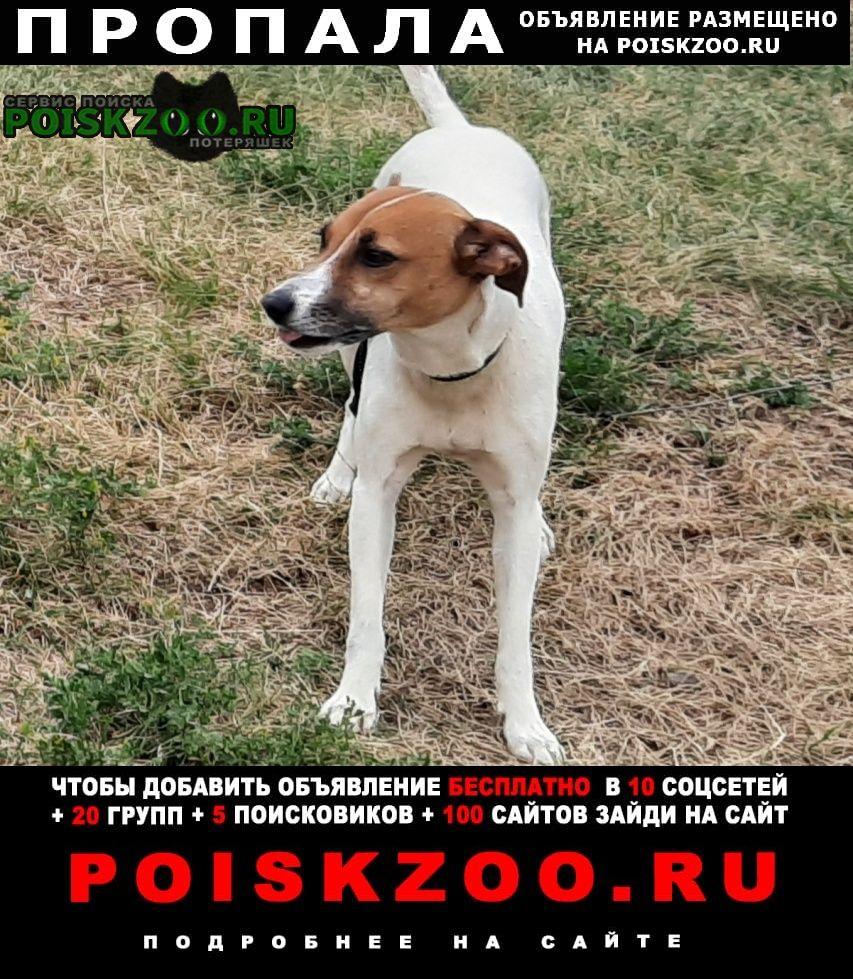 Пропала собака джек рассел терьер парсон Кострома