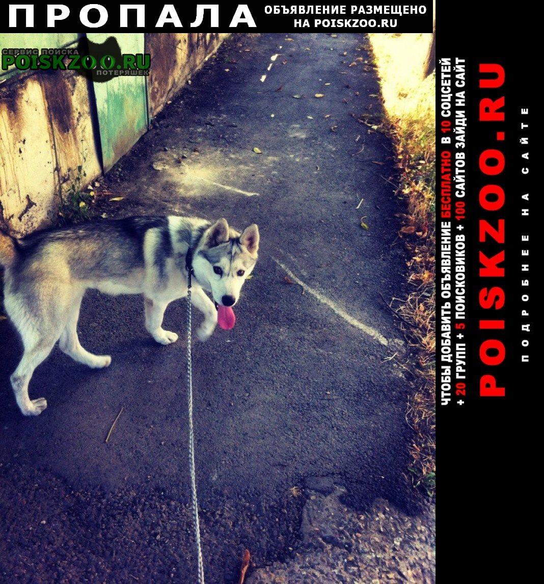 Пропала собака кобель отзывается на мартин. одета два ошейник Ставрополь