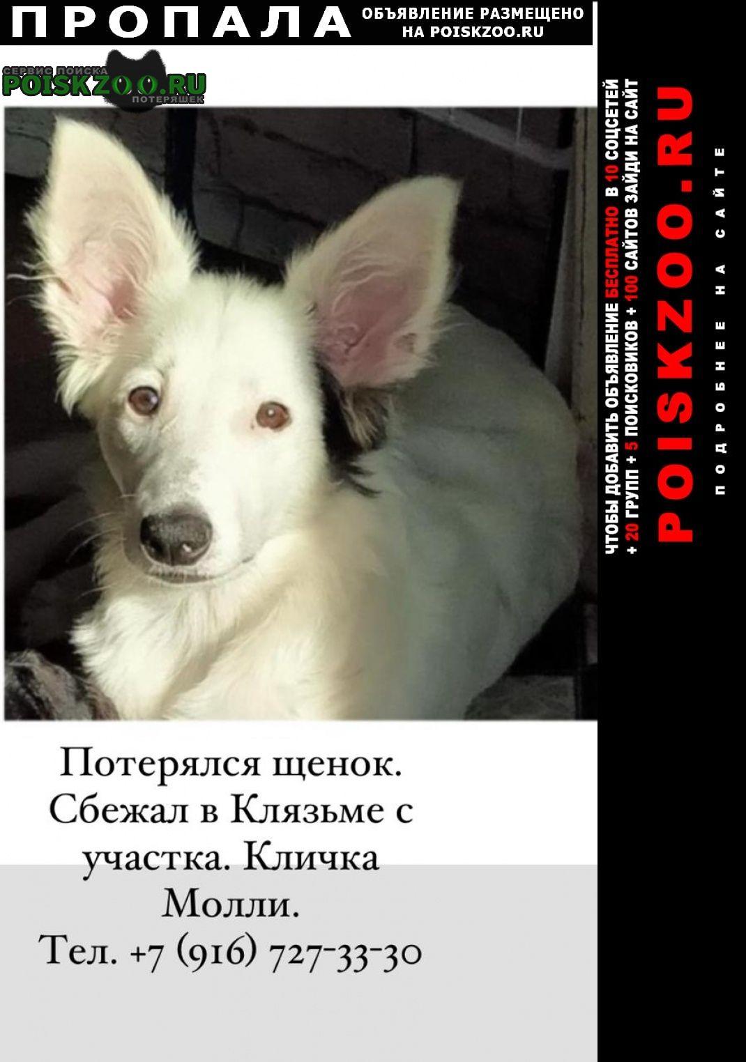 Пропала собака Клязьма