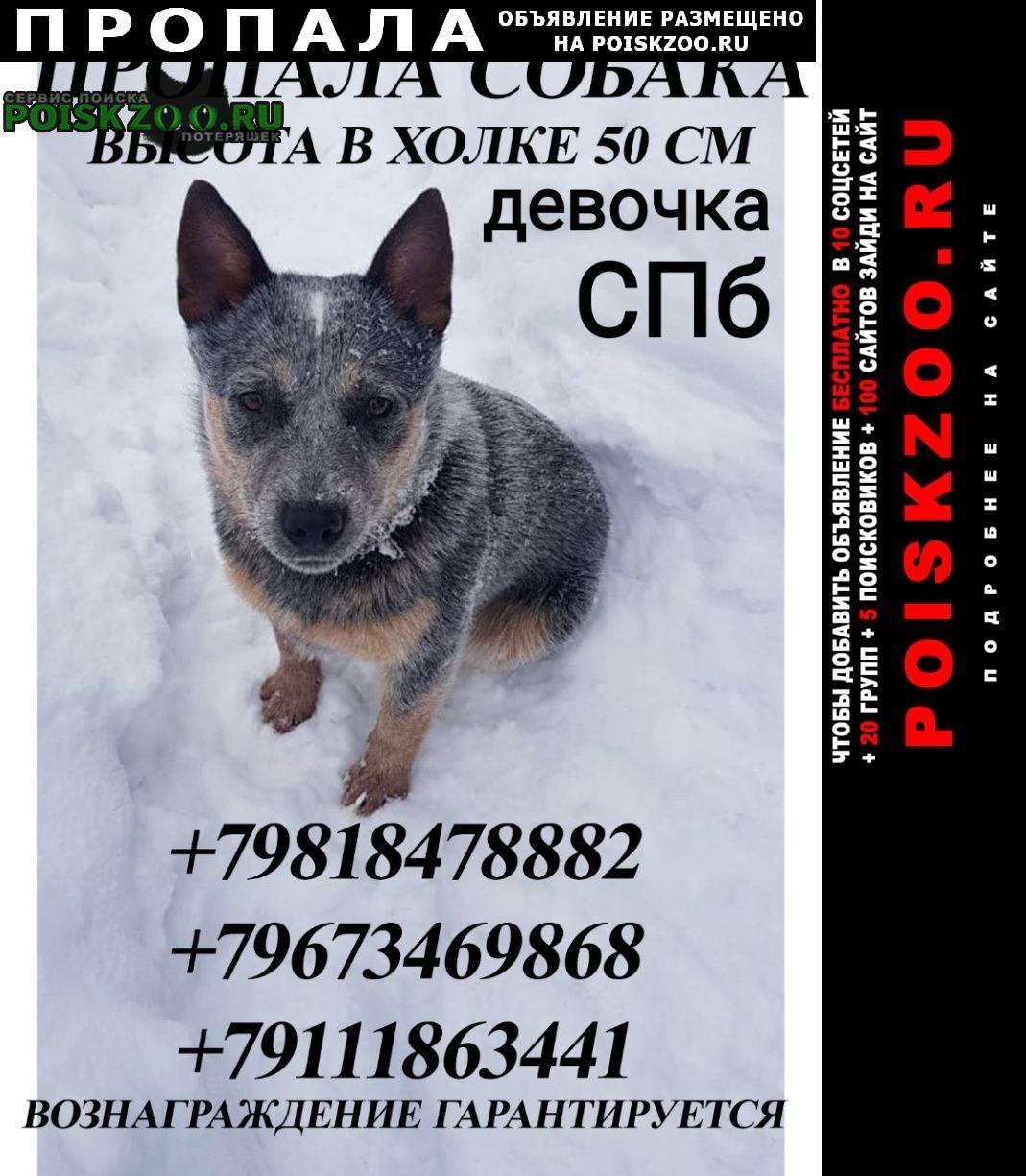 Пропала собака поиски продолжаются Санкт-Петербург