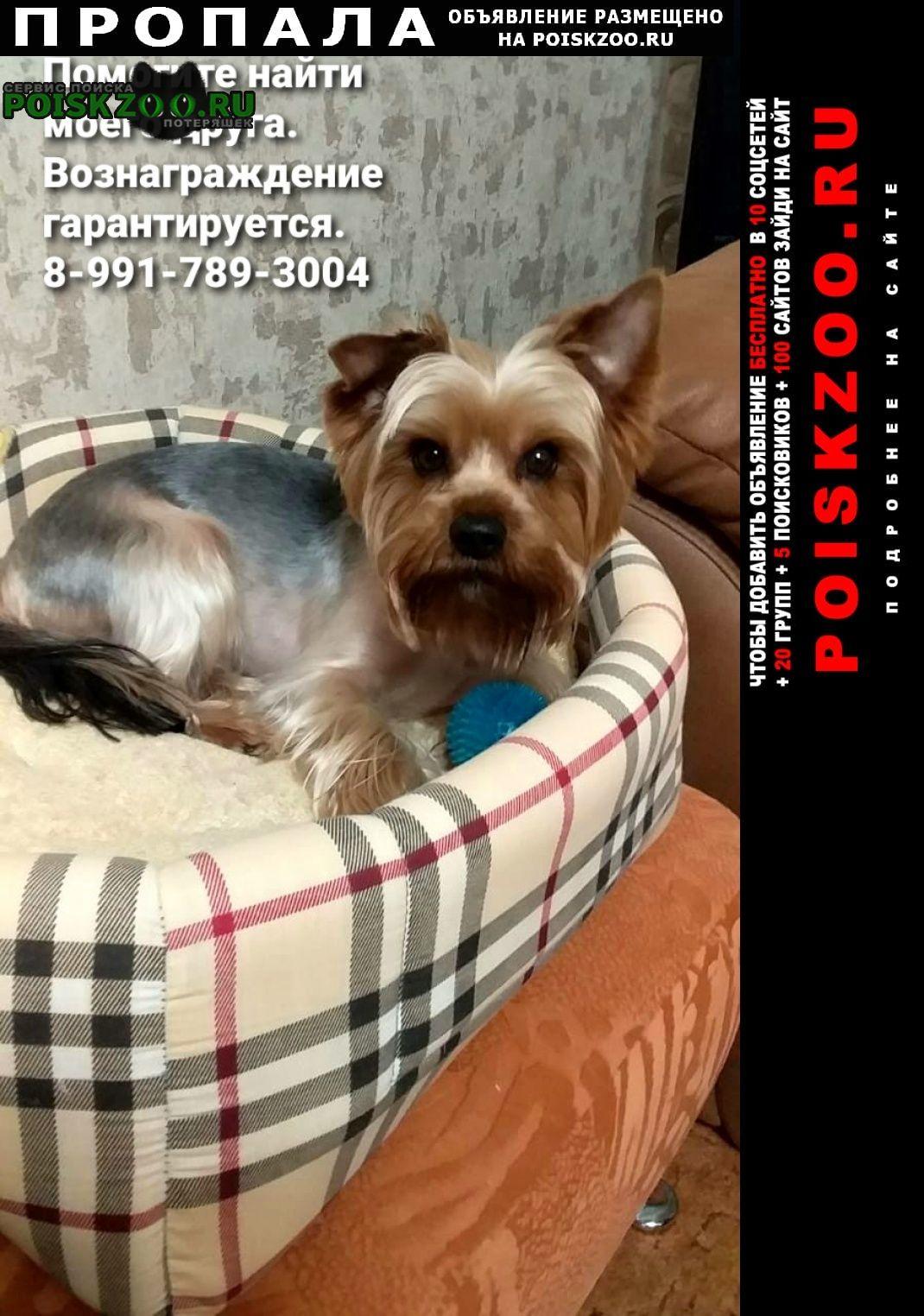 Пропала собака кобель вознаграждение гарантируем Кинешма