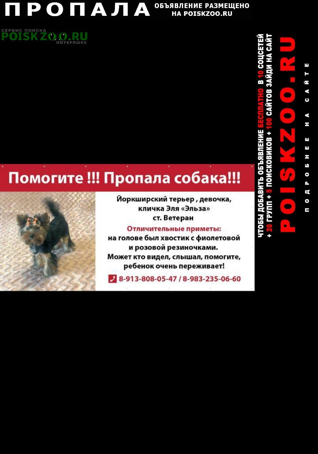 Пропала собака йорк Томск