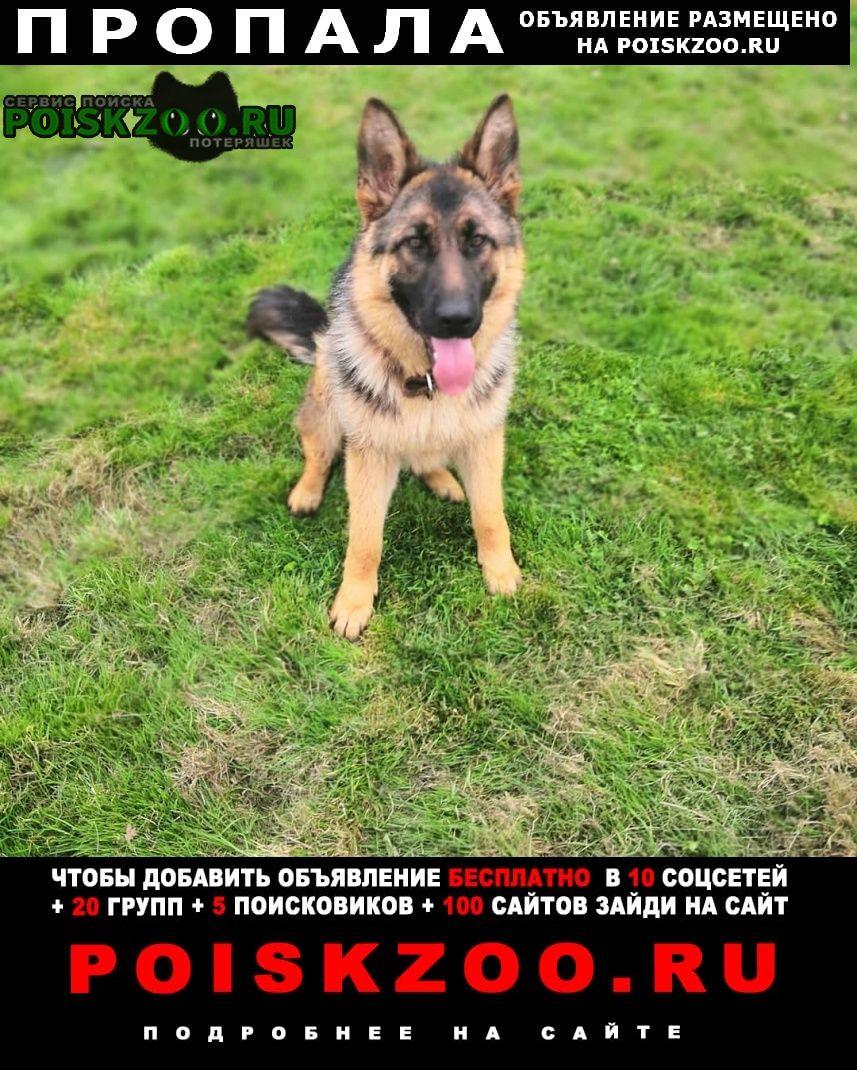 Пропала собака Владивосток
