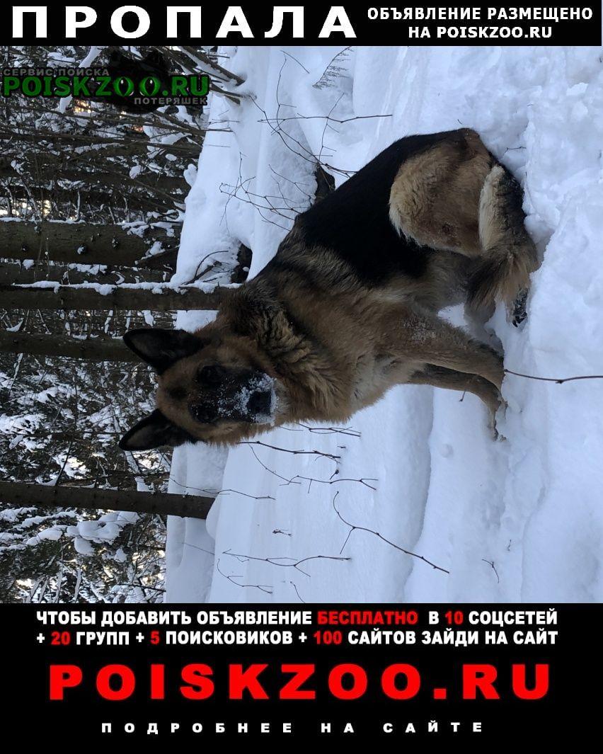 Пропала собака Звенигород