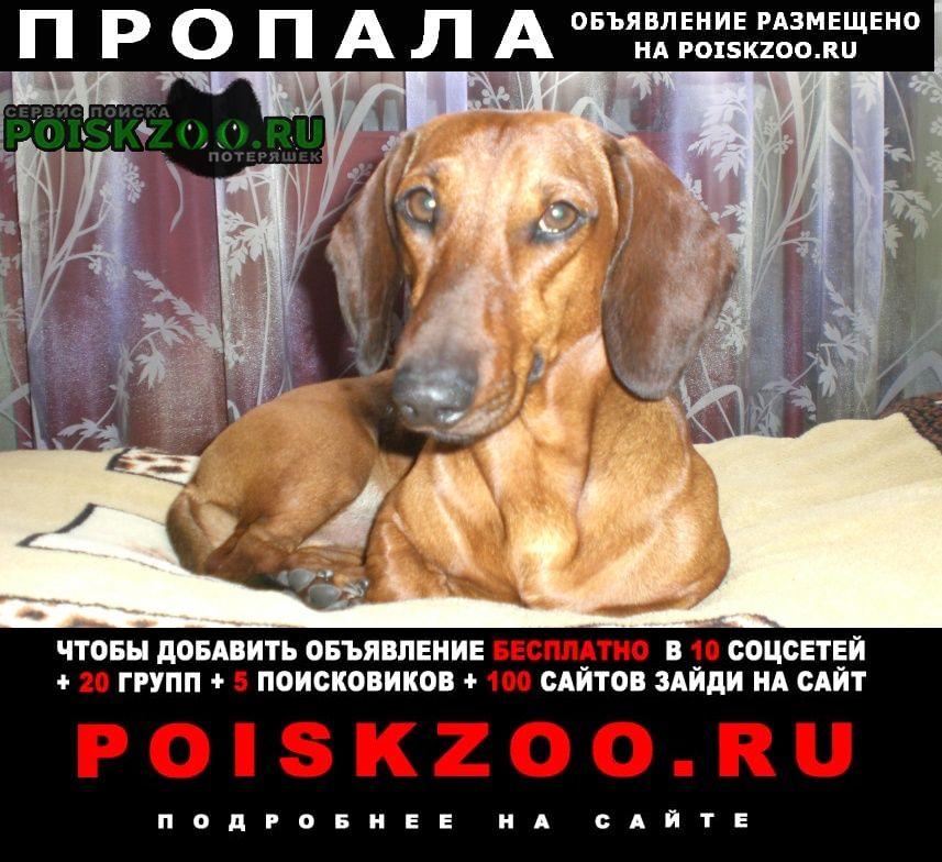 Пропала собака кобель Черногорск Хакасия