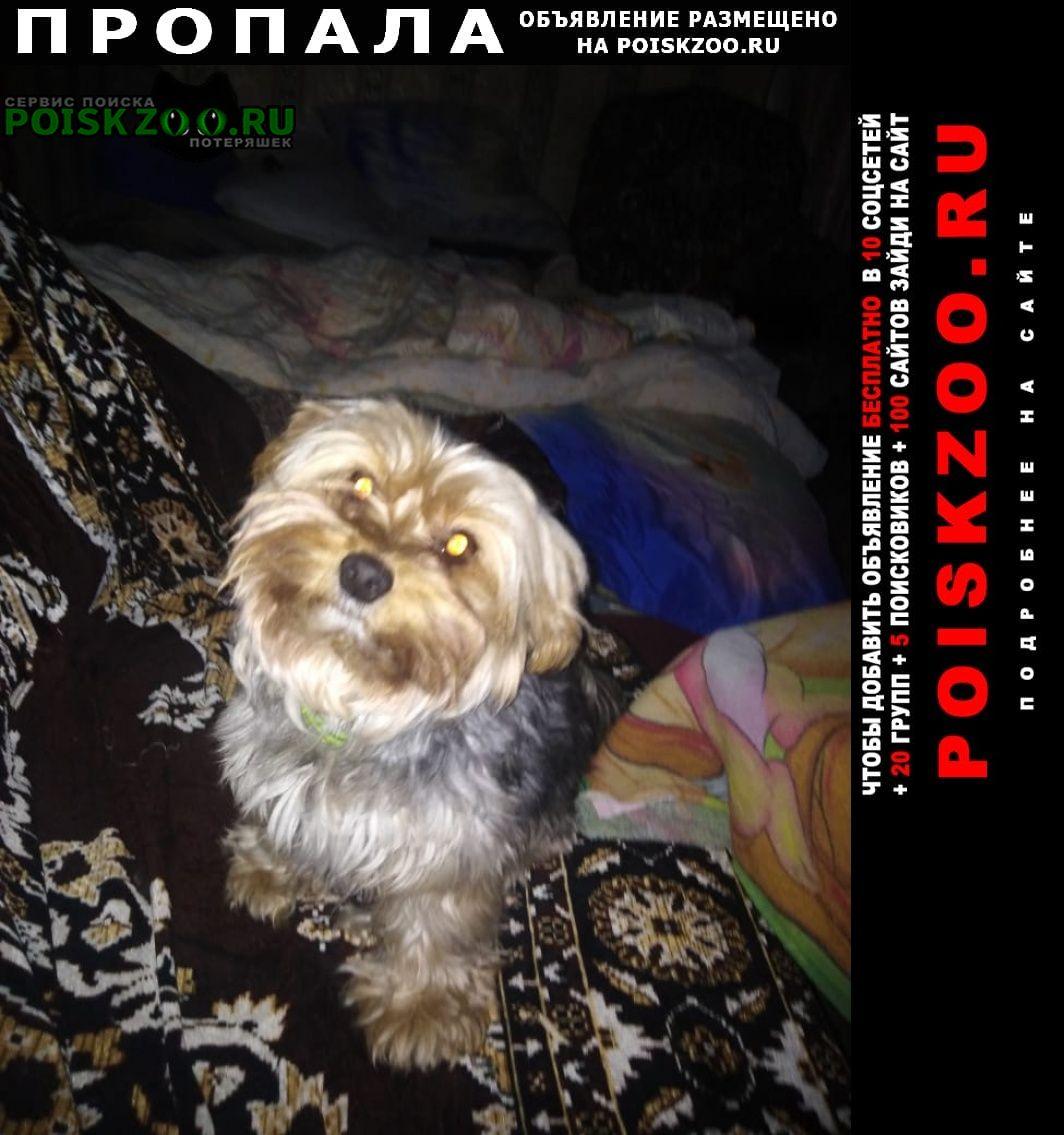 Пропала собака кобель помогите найти Спас-Клепики