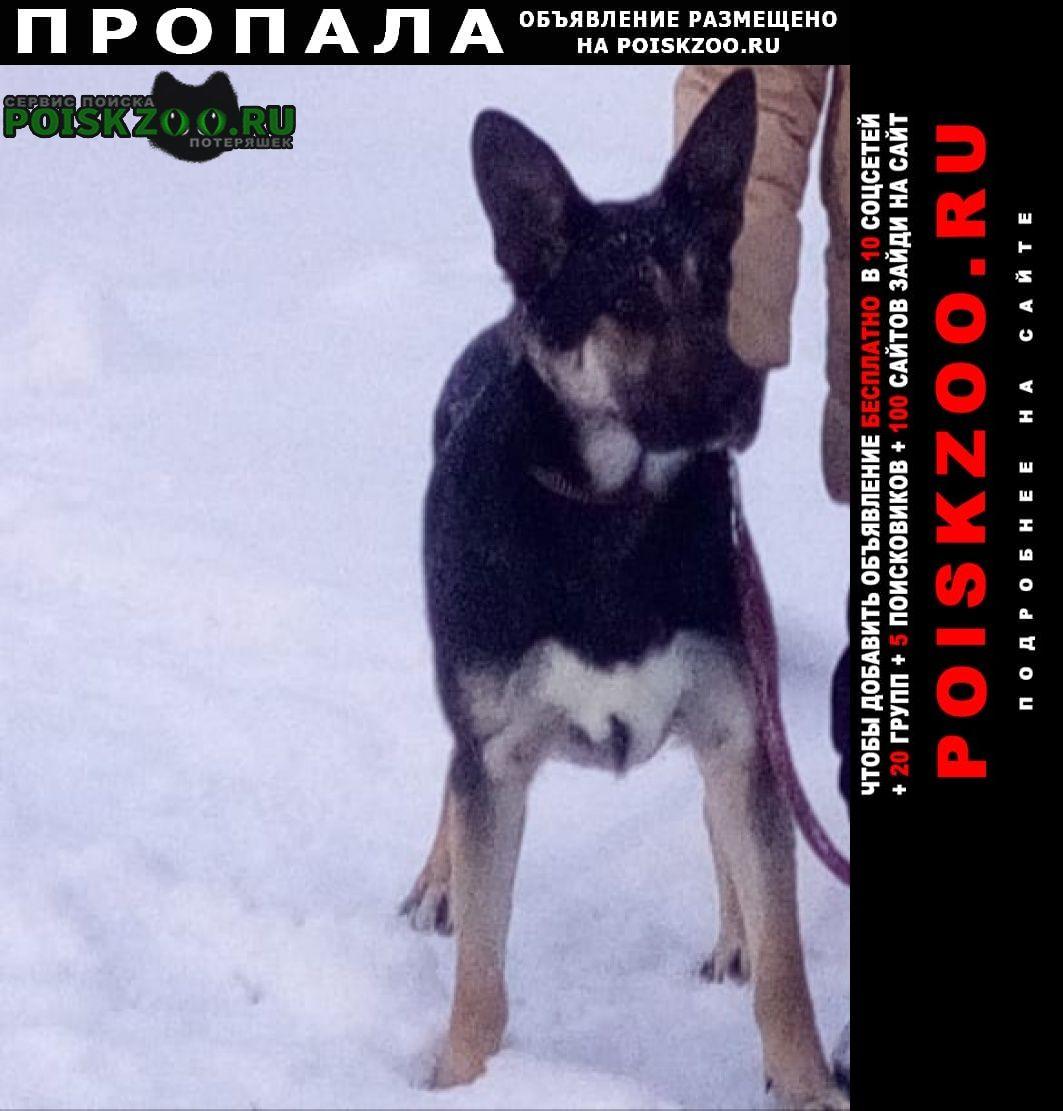 Пропала собака кобель Клин