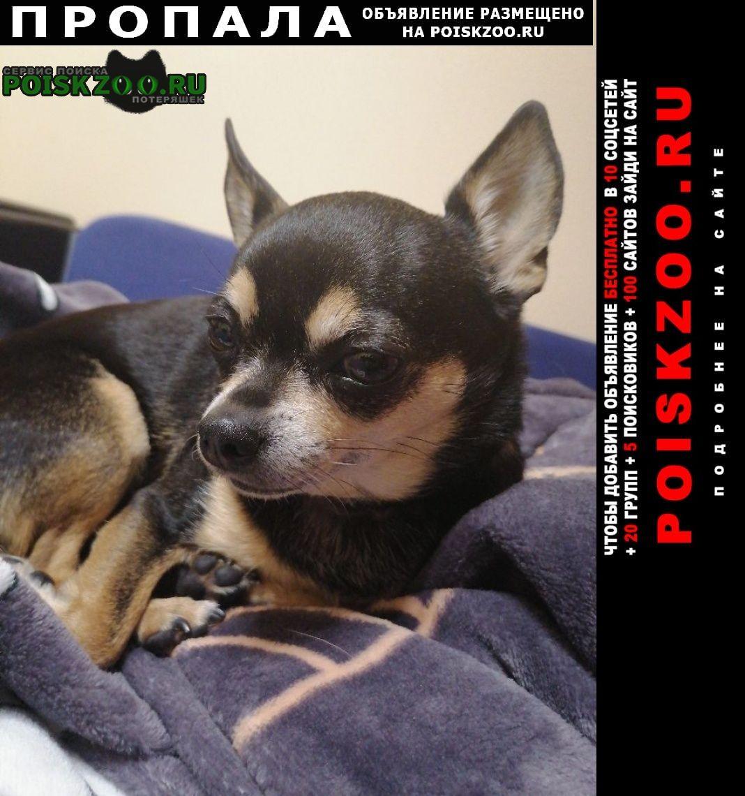 Пропала собака кобель потерялась чёрная чихуахуа Новороссийск