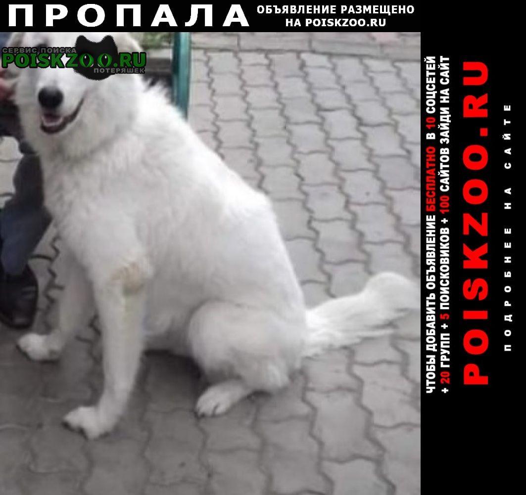 Пропала собака Томск