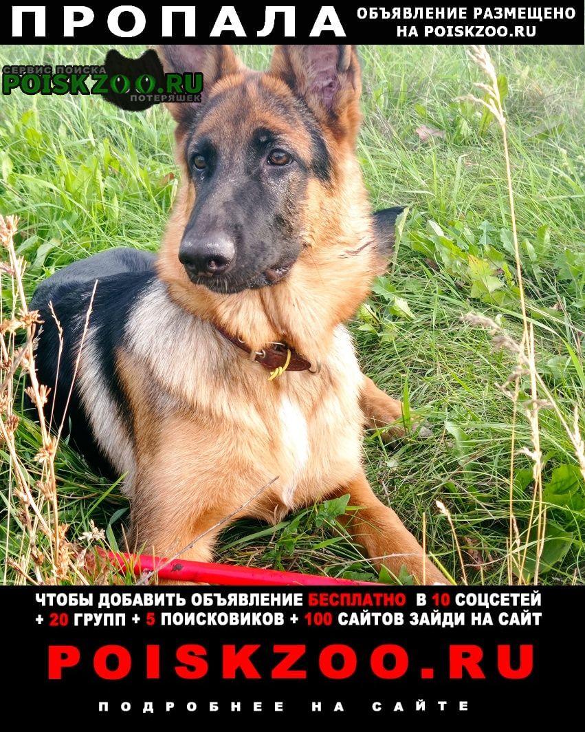 Пропала собака убежала Челябинск