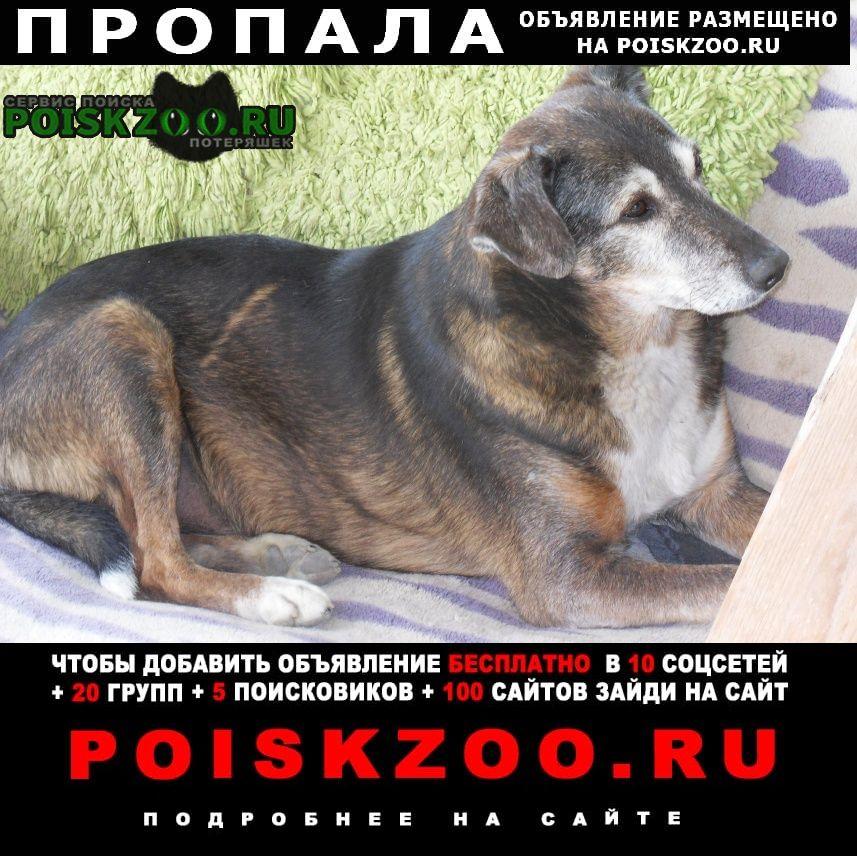 Пропала собака кобель 21.05 пёс, по кличке бим. Симферополь