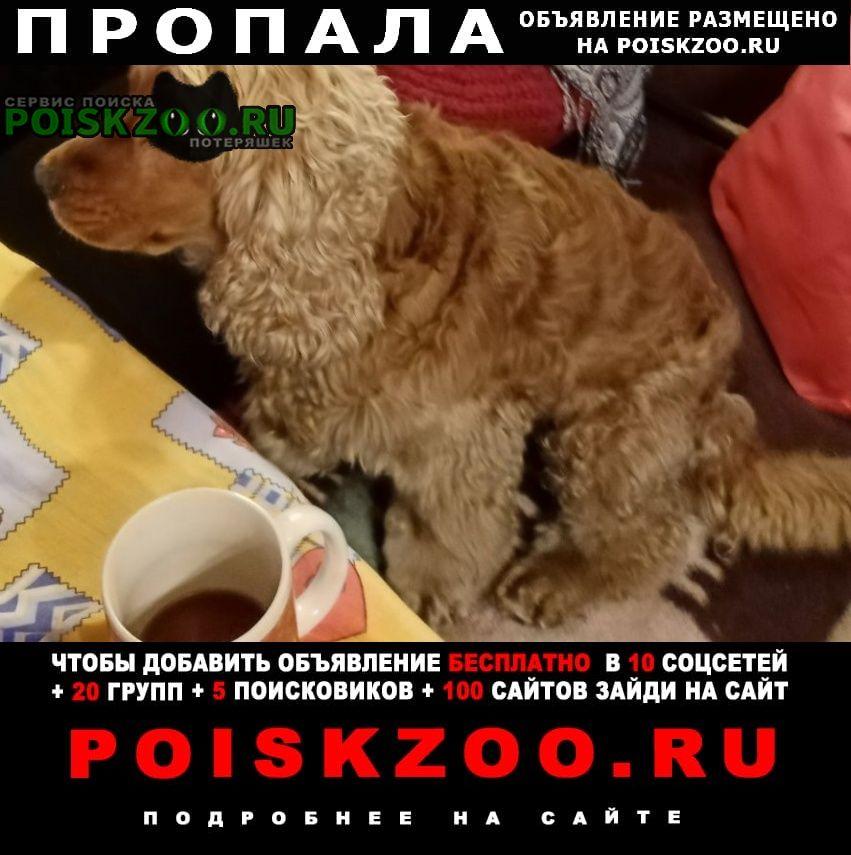 Пропала собака кобель 22 мая 2021 Иркутск
