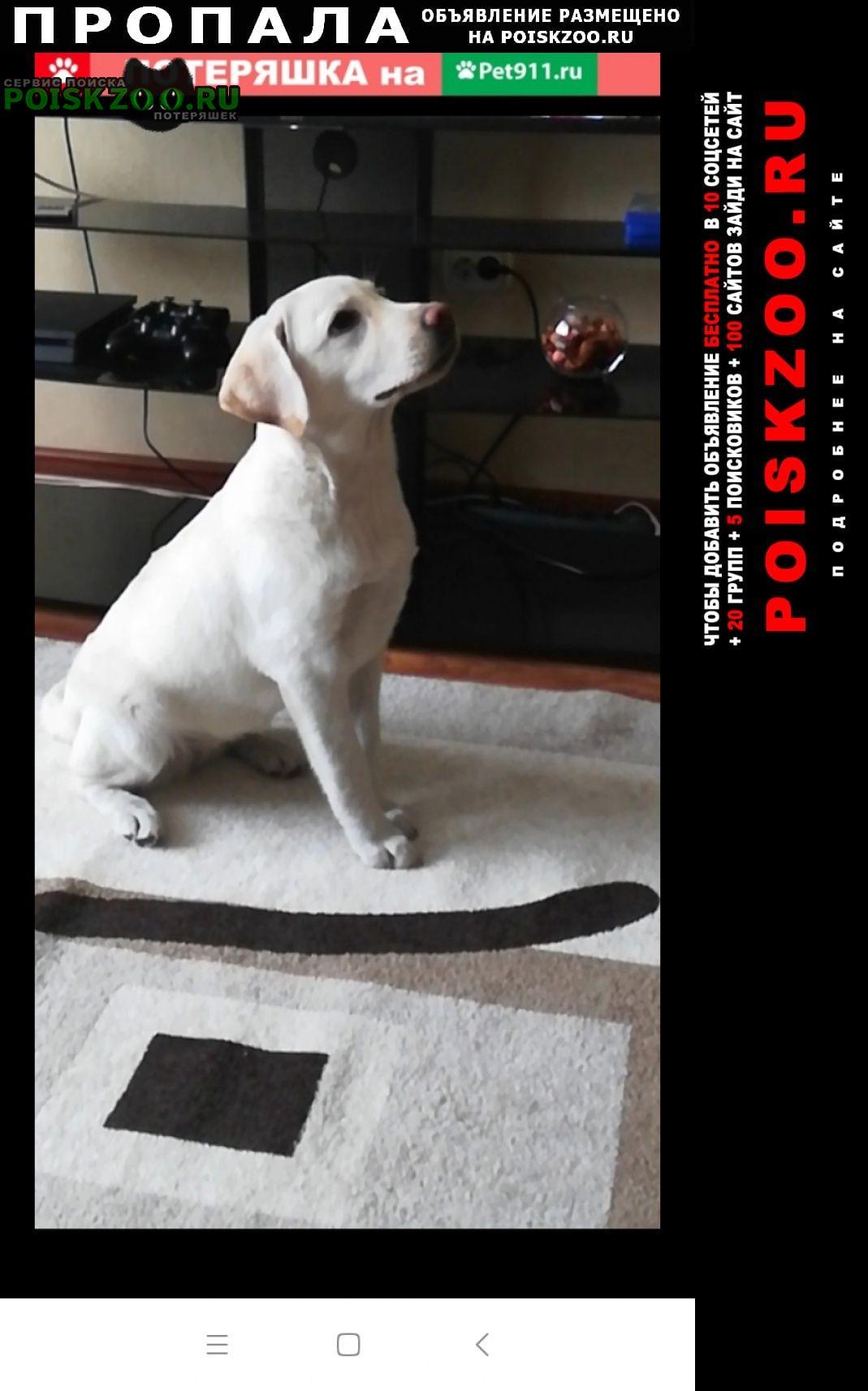 Пропала собака помогите найти собаку Омск