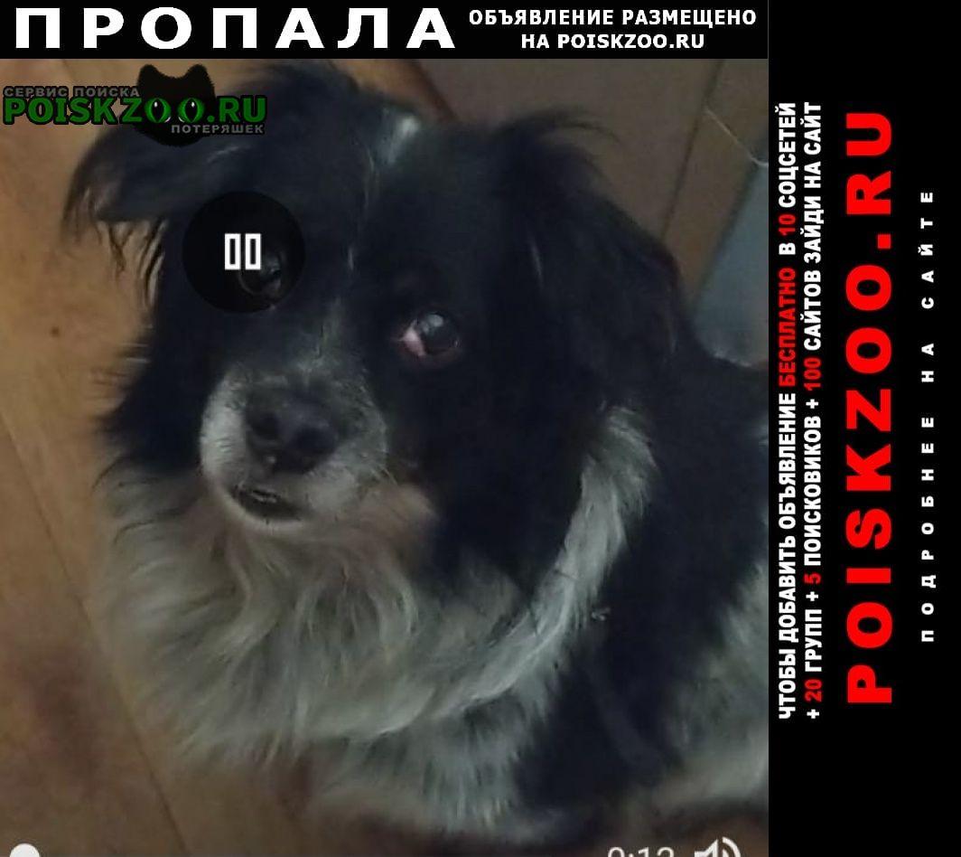Пропала собака кобель вознаграждение Красноярск